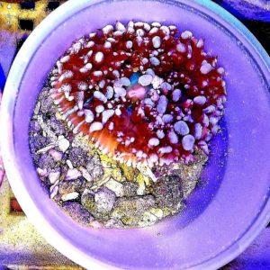 WYSIWYG Corals