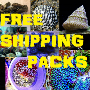 ALL FREE SHIPPING PACKAGES