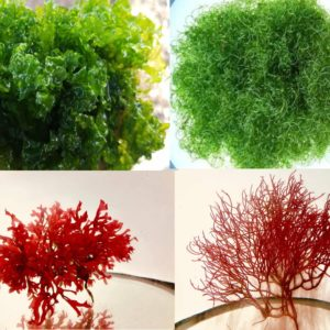 Macro Algae
