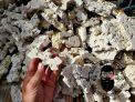5lbs. Ultra Thin Frag Rock Aragonite, Lightweight, Porous, Aquariums
